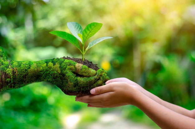 environment-earth-day-hands-trees-growing-seedlings_34998-113